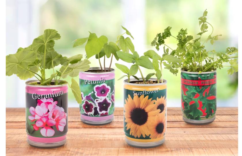 fire forskellige planter på dåse