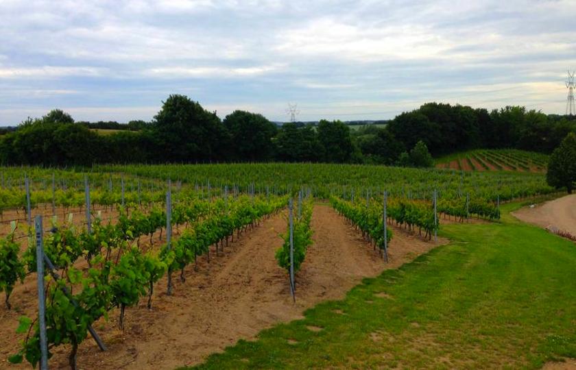 dansk vingaard
