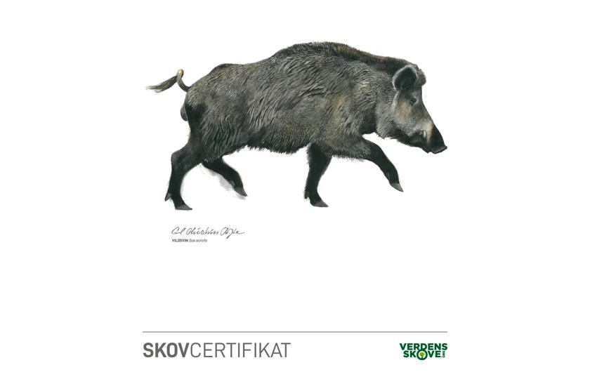 skovcertifikat vildsvin
